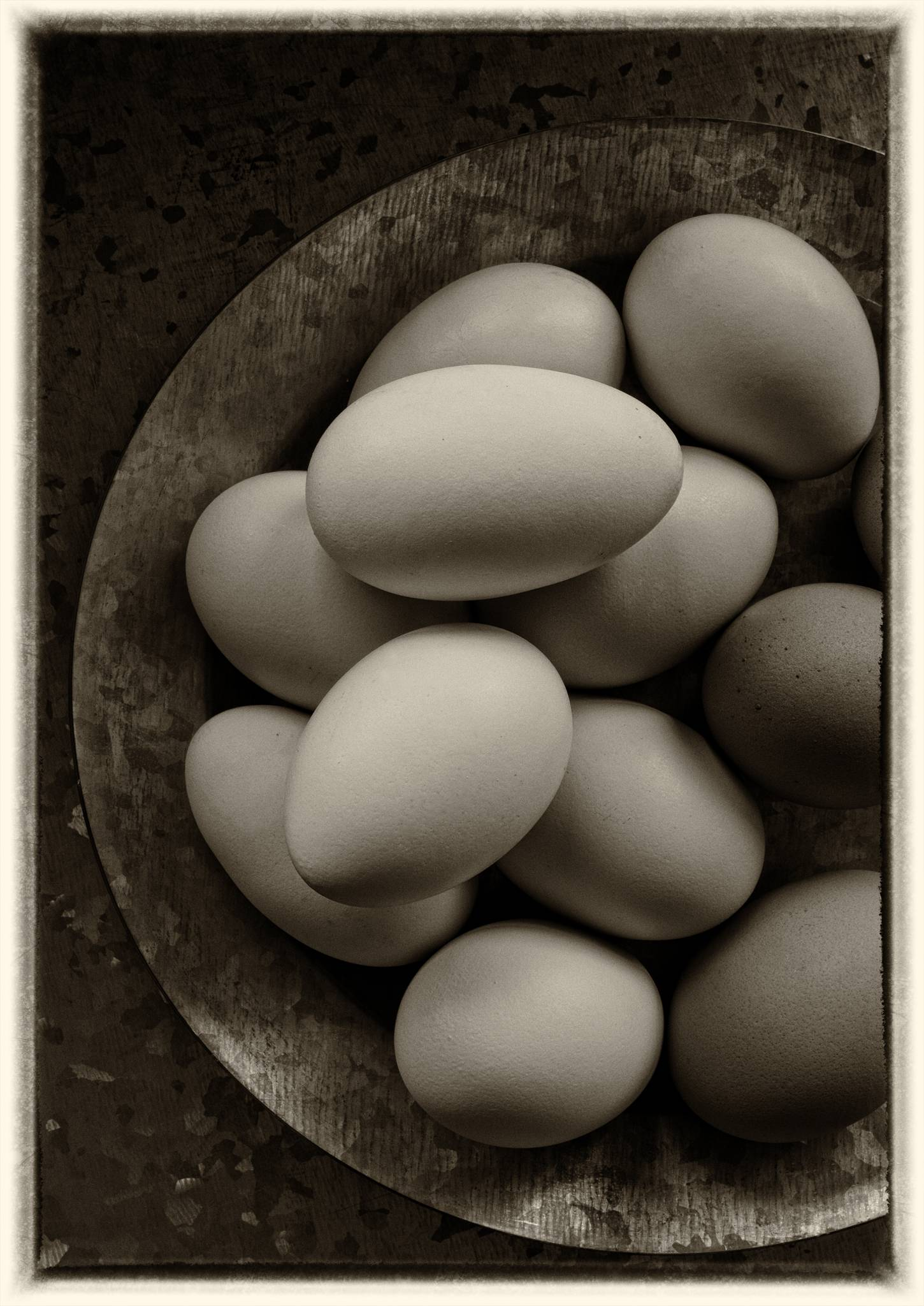 Galvanized steel with Araucana & brown eggs