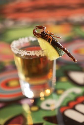 food and beverage photography tequila with scorpion